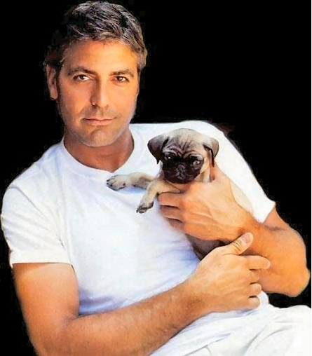 Clooney with Puppy